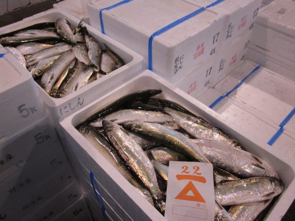 北海道 魚介類 旬